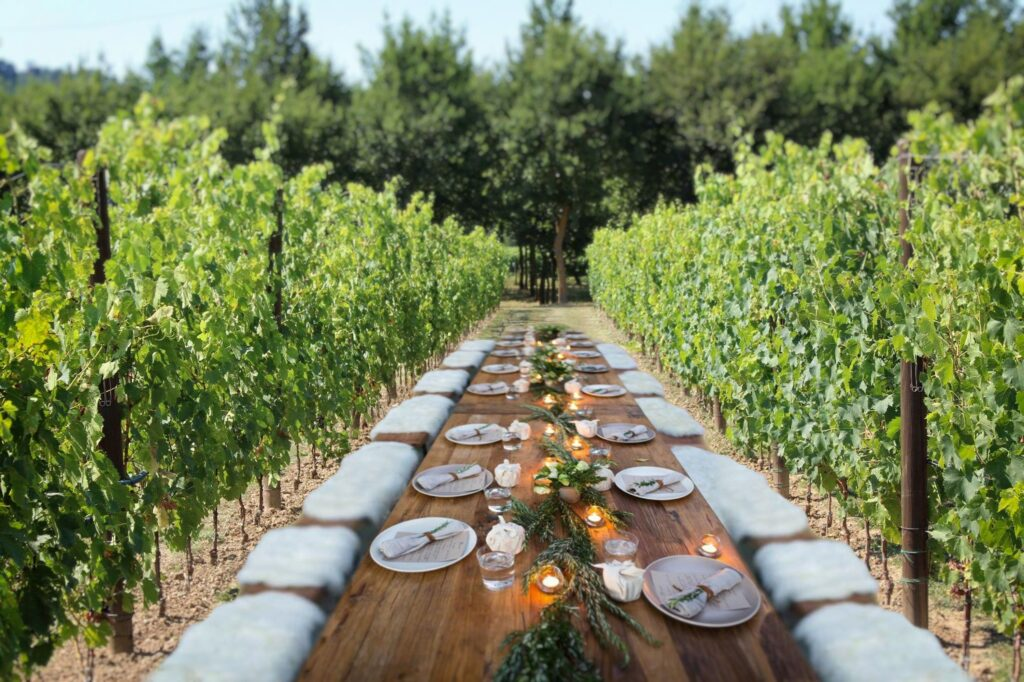 Lunch in the Vineyard (1)